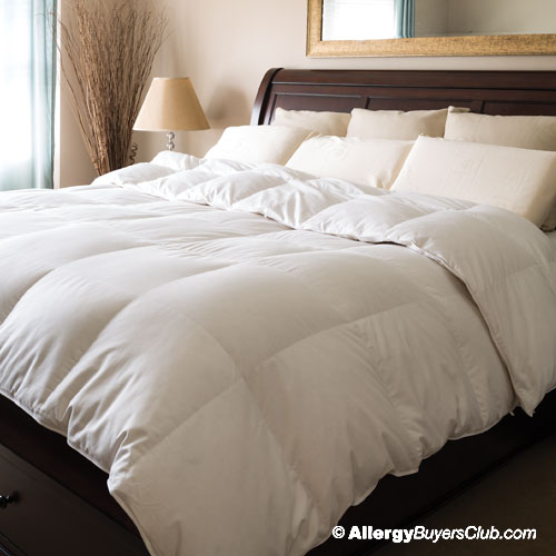 monarch hypodown 800 fill down comforter - Down Blankets